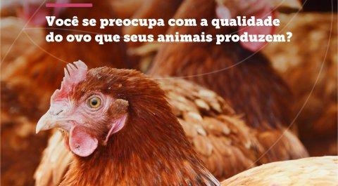 Você se preocupa com a qualidade do ovo que os seus animais produzem?