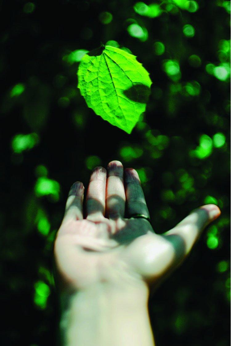 Mig-PLUS recebe Selo Verde pelas boas práticas ambientais