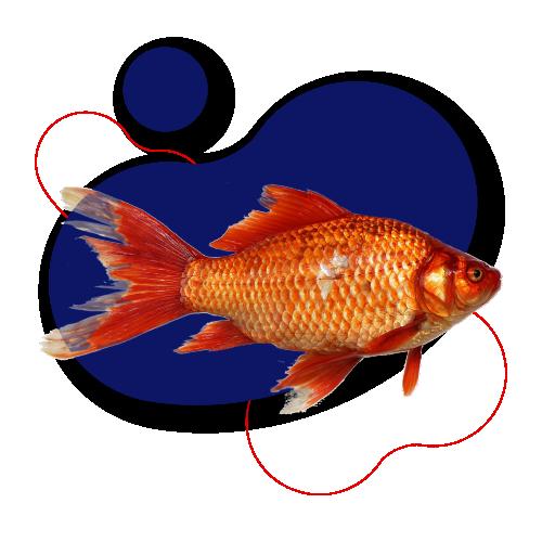 Peixes / Aquacultura