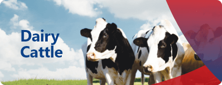 Discover our products and feed for dairy cattle