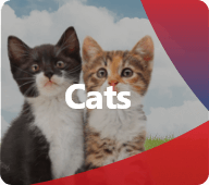 Discover our products for Cats