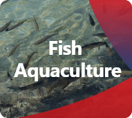 Discover our products for Fish