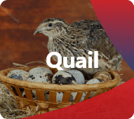 Discover our products for Quail