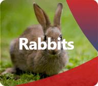 Discover our products for Rabbits